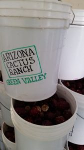 prickly pear fruit in stacked arizona cactus ranch buckets